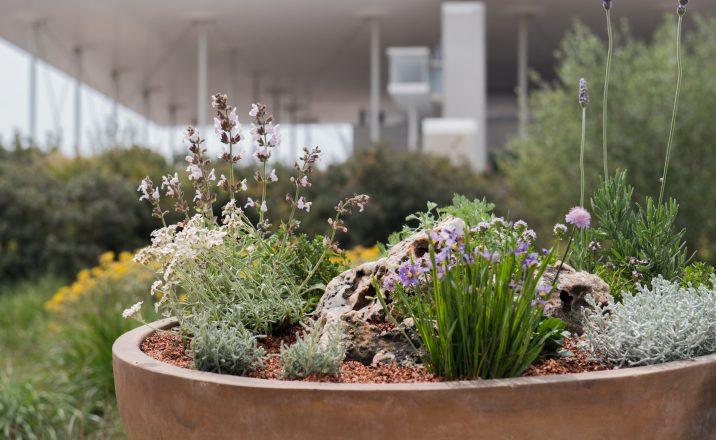 Οι κηπουροί του Πάρκου: Ένας μεσογειακός κήπος στο μπαλκόνι μας
